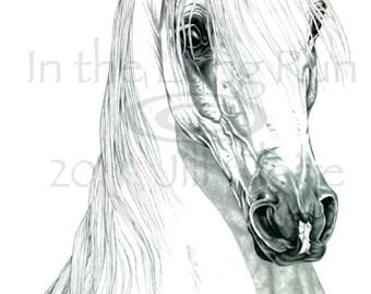 Arabian Horse Art Painting Print Jill Claire Original