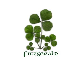personalized art, shamrock family, Irish wedding gift, Irish anniversary, Irish housewarming, engagement gift, Irish baby,Irish Father's Day