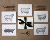 Sheep Lamb Note Cards Set of 10 with Matching Envelopes