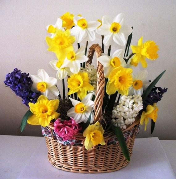 Flower Bulb Baskets : Ready to grow fall bulb basket eco friendly prechilled