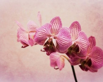 ORCHIDS PURPLE Vintage Dreamy Floral Original Color Art Photograph