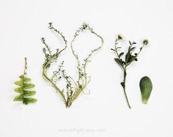 Green Collection. 8x10. Fine Art Photographic Print. Minimalist. Natural Home Decor. Indoor garden botanical. Kitchen wall art.