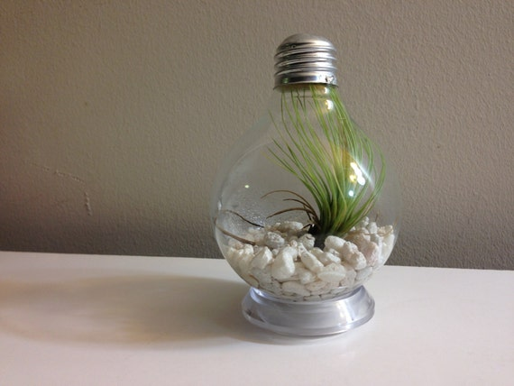 Items Similar To Repurposed Round Lightbulb Vase On Etsy