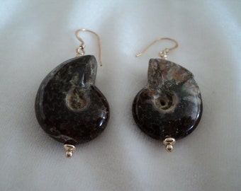 Lovely Ancient Prehistoric Ammonite Shell Fossil and Gold Earrings