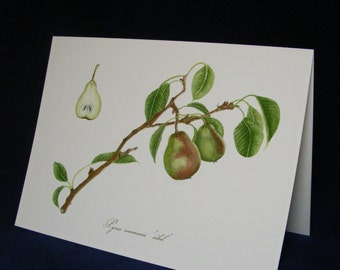 SECKEL PEAR Botanical Card