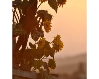 Dreamy Fall Landscape Photo, Yellow Sunflower Print, Late Summer Evening Afternoon Light Glow,Countryside Sunset Image,Pastoral Autumn Decor