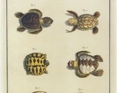 Vintage Turtle Print Illustration Book Plate SALE~~Buy 3, get 1 free