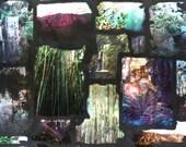 Arboretum California Life collage professional giclee photo art print