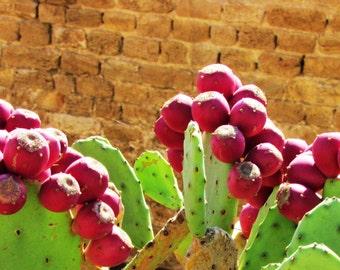 Israeli Blooming Cactus