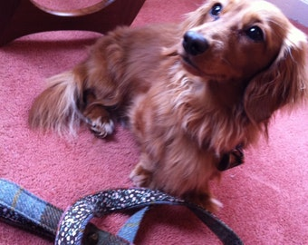 Harris tweed dog leash lead made in Scotland