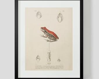 Vintage Amphibian Frog Plate 86