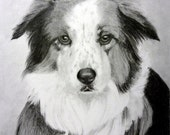 Custom Dog Drawing From Picture - Original 8x10 Pet Portrait Pencil Sketch Art From Photo