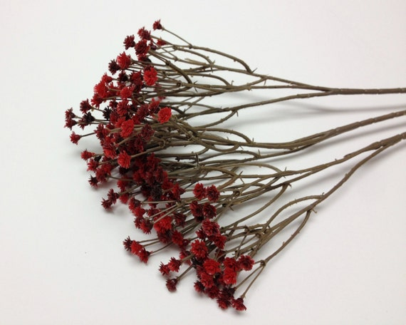 Burgundy Red Plastic Baby S Breath Gypsophila
