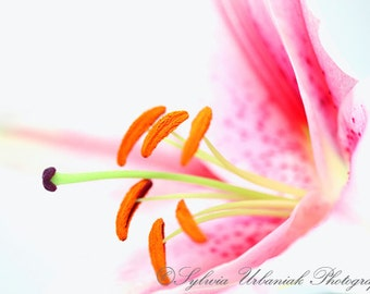 Abstract Photography Flower Photography Macro Photography Spring photography Pink wall decor Fine Art Photography print