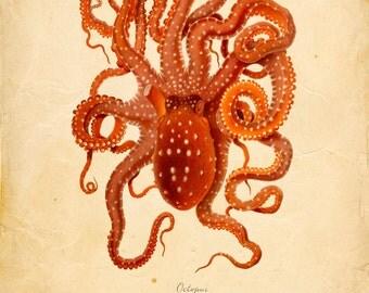 Vintage Octopus Squid Print 8x10 P263