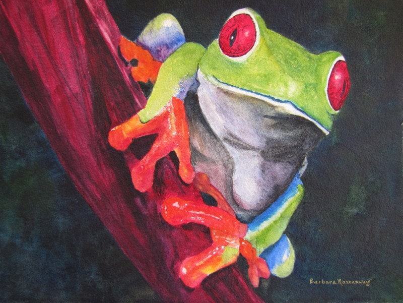 Red Eyed Tree Frog Painting Tropical By Barbararosenzweig