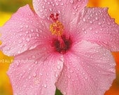 Hibiscus water drops on vibrant pink spring summer flowers 8 x 10 Fine Art Print