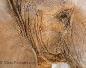 Elephant Photo Art, Wildlife Photography, gray, brown, Fine Art Elephant Print, Nature wall art