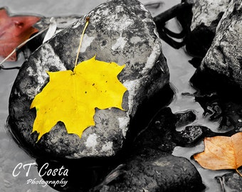 Nature Photography, Yellow Maple Leaf Print, Limited Edition Autumn wall art, colorful home decor