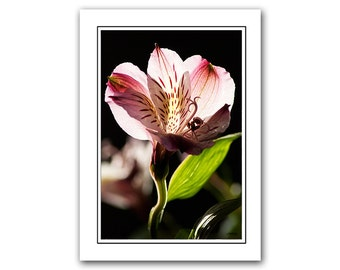 Flower Greeting Card with Envelope, Floral photo card, Note Card, pink, Thank You Card, notecards