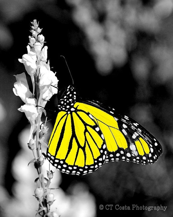 items similar to yellow butterfly fine art print