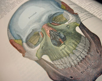 70s vintage hardcover book-1975 Gray's Anatomy - medical, illustrations, Lea & Febiger