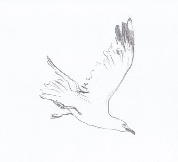 Simple bird drawing flying - photo#24