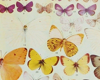 Vintage Butterfly Book Plate - Yellow and Purple