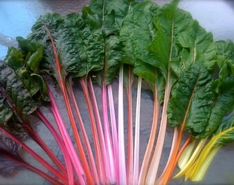 Swiss Chard Rainbow Variety Pack Open Pollinated Delicious Flavor Easy to Grow Rare Seeds