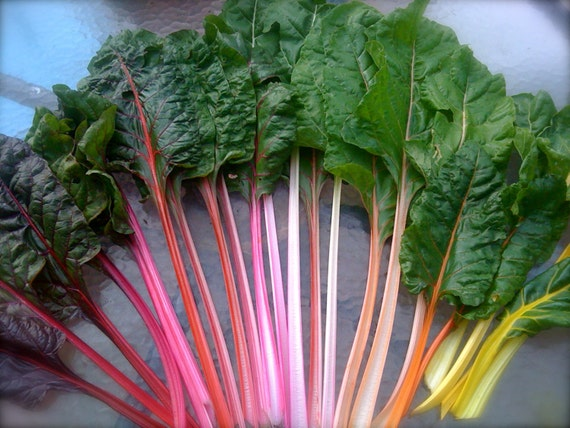 Organic Heirloom Rainbow Swiss Chard Seeds
