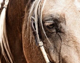 Horse Photography Fine Art Horse Print