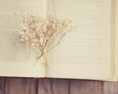 Beige dried flower print- cream, vintage book, white, neutral colors, floral, spring,  romantic, rustic, 8x10 print, fine art photography - dullbluelight