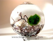 FREE 2nd Marimo Ball included- Featured in NORDSTROM Marimo Moss Ball Globe Aquarium / Terrarium: Several Colors Available