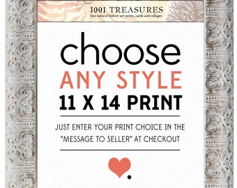 Any Print of Your Choice - 11 x 14 Inch