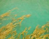 nature photography, mermaid art, ocean, beach, nature, seaweed, mermaid, dreamy blue, ethereal, wave, vintage - Waters of Anacapa, 8x12