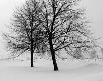 two trees black and white photograph finland - snow trees black and white photo helsinki - black and white trees photo - 2 tree photo suomi
