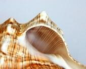 Spiral Sea Shell - nautical photograph beach home decor - summer cottage wall art - still life photography