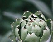 Artichoke print, kitchen decor, plant photograph, green vegetable, food photography, wall art, home decor
