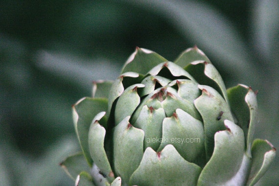 Artichoke print kitchen decor plant photograph green by for Artichoke decoration