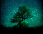 Starry Night Oak Tree Fine Art 5 x 5 Photographic Print