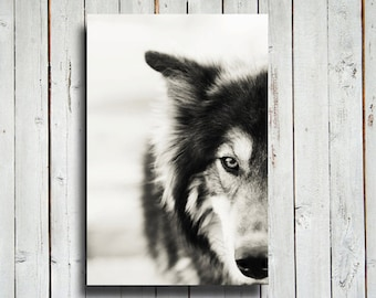 The Wolf - Canvas - 16x24 in. Wolf decor- wolf art -dog - wolf dog- wolf photography - wolf decoration - native american