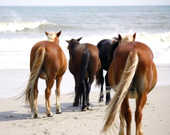 Coastal Photography | Wild Horses on Outer Banks Beach | Equine Photography | Horse Photography | Horse Art | Beach Wall Art | Coastal Decor