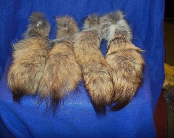 Real large coyote skin Tail animal fur taxidermy craft supply pelt part