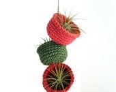 Air Plant Trio in Colorful Hanging Cotton Bowl Planters