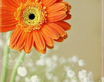 Flower Photography- Orange Gerbera Daisy, Floral Wall Art, Orange White Tan, Gerber Daisy Print, Floral Still Life, Orange Daisy Photo