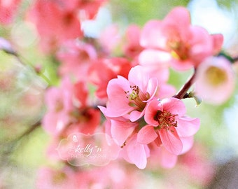 Soft Quince- Spring Flowers- Flower Photography- Flowering Quince Photo- Pink Green Pastels- Nature Photograph- 8x10 Fine Art Print