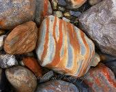 Rock Photography, Zebra, Striped Rock Art, rusty pumpkin 8x10, Abstract Print, minerals, Zebra decor, glacier, Stones, Pebble Fine Art Print