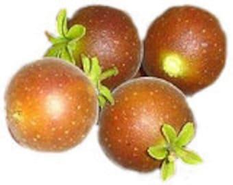 7 Ceylon Gooseberry Seeds-1030