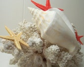 Beach Vintage Seashell Sea Shell Star Fish with Coral