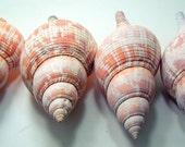 Beach Vintage Seashell Tulip Fasciolaria LARGE